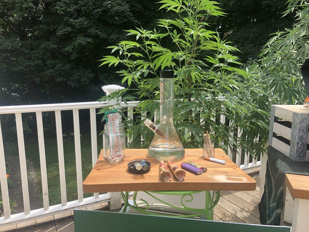 Cannabis Bong