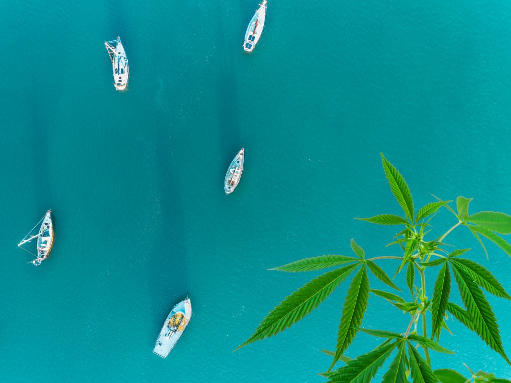 Cannabis Events at the Marina